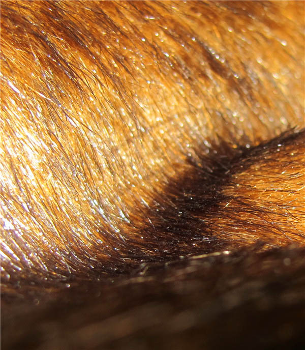 Luxury steel brown mink faux fur fabric